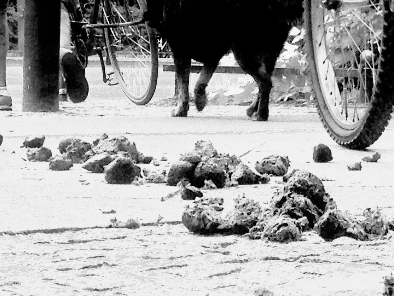 Auf die Meile gekackt, aber der Vierbeiner ist nicht schuld - es waren die Polizeipferde (Foto: André Franke)